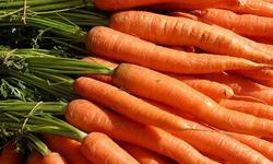 Сажаем морковь