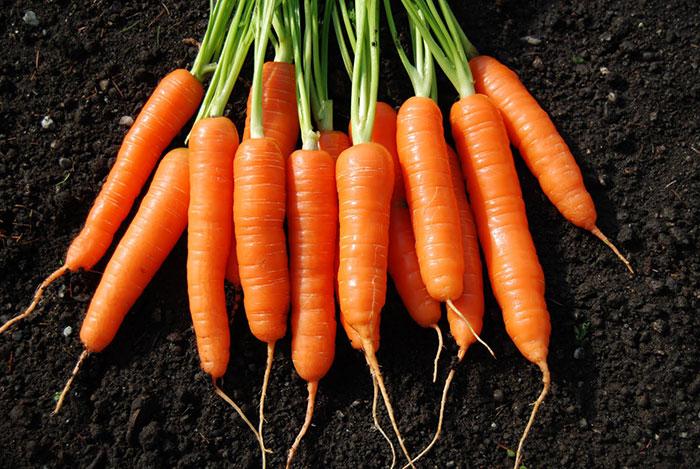 невкусная морковь