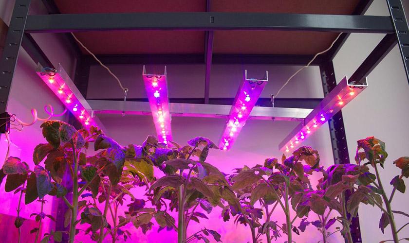 Какие цветы можно выращивать при искусственном освещении?