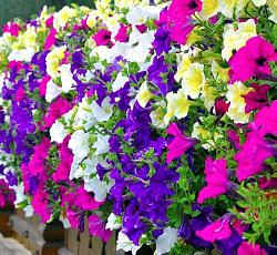 Дешевые цветы в москвы интернет аптеки — img 3